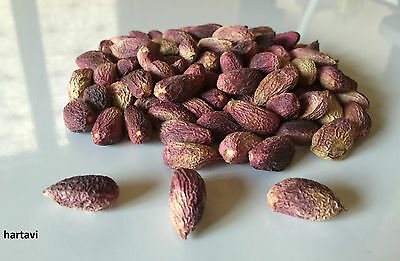 PISTACHIOS GENUINE Turkish Antep PISTACHIO, PISTACIA VERA Tree EDIBLE Fresh Seed