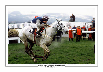 Desert Orchid Horse Racing A4 Photo Simon Sherwood Cheltenham Gold Cup 1989