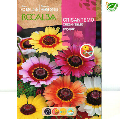 Crisantemo Tricolor ( Chrysanthemum carinatum ) 5 gr / 2.000 semillas - seeds