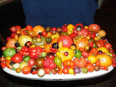 Pack of 200 Seeds From a Mix of 200 DIFFERENT KINDS of Tomatoes! See List