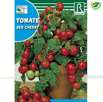 Tomate Cerise Red Cherry ( 1 gr / 350 semillas aprox ) seeds