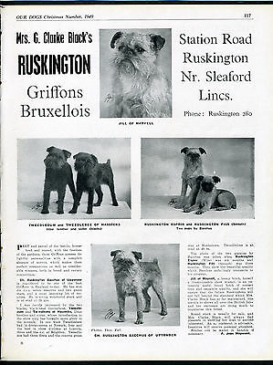 Brussels Griffon Our Dogs Old 1949 Dog Breed Kennel Advert Print Page