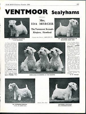 Sealyham Terrier Our Dogs Old 1949 Dog Breed Kennel Advert Print Page