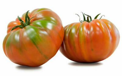 Tomate Raf Marmande  ( 200 semillas - seeds )