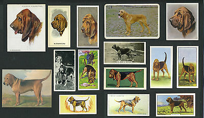 Lot #1 15 Original Vintage Bloodhound Collectable Dog Cigarette And Trade Cards