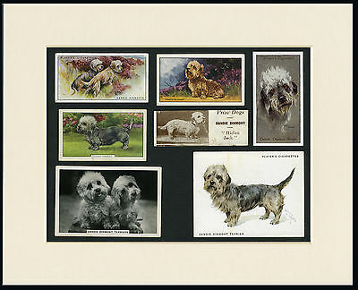 Dandie Dinmont Terrier Mounted Set Of Dog Collectable Cigarette And Trade Cards