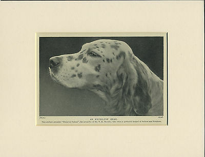 ENGLISH SETTER HEAD STUDY OLD 1930's NAMED DOG PRINT MOUNTED READY TO FRAME