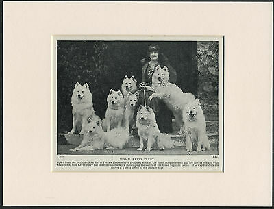 SAMOYED MISS KYTE PERRY AND DOGS OLD 1930's DOG PRINT MOUNTED READY TO FRAME
