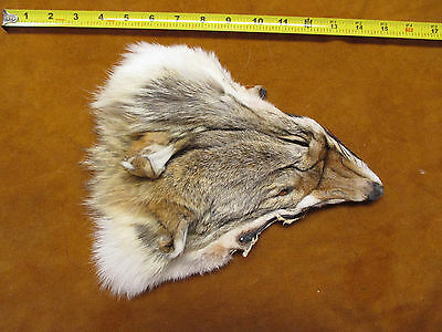 1 coyote face/fur/Hides/native crafts/fly tying/cabin,western decor