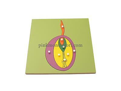 Pinkmontessori Botany Material - Seed Puzzle