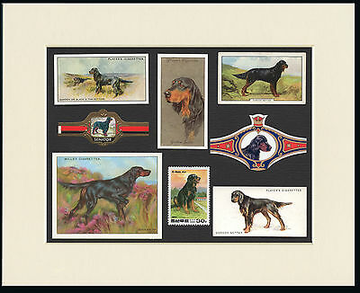 Gordon Setter Mounted Set Of Vintage Dog Collectable Cards Bands And Stamps
