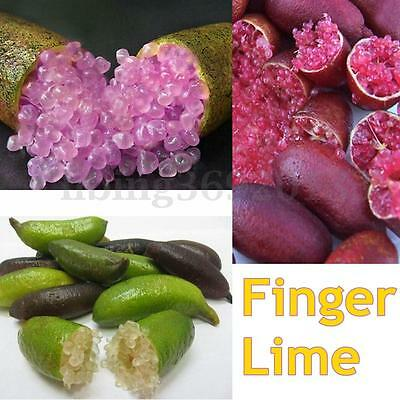 20PZ Finger lime seeds Citron Caviar Fruit Rare Plant Ice Pink Garden Balcony LI