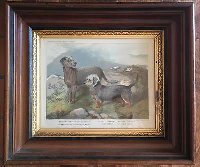 Bedlington & Dandie Dinmont Terriers Dog Chromolithograph London 1881 Framed