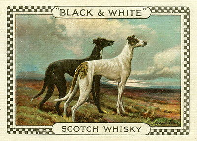 Greyhound Dogs On Great Vintage Style Whisky Advert Dog Greetings Note Card
