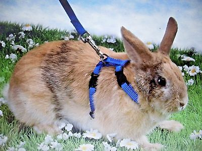 Rabbit - Cat, Small Animal Pet Harness & Lead Set, can also be used for Ferrets