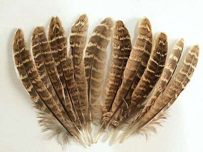 wholesale 10-100pcs natural 10-15 cm/4-6inches pheasant beautiful feathers