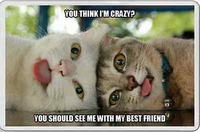 fridge magnet TWO CATS tongues out BEST CRAZY FRIENDS Fun unusual gift