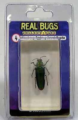 DeAGOSTINI REAL BUGS KUMBANG PADANG JEWEL BEETLE IN LUCITE INDONESIA ENTOMOLOGY