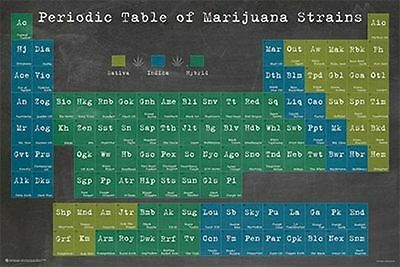 PERIODIC TABLE OF MARIJUANA STRAINS - WEED POSTER - 24x36 POT SMOKING 10885