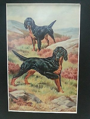 Vintage 8 x 10 Gordon Setter Black & Tan dog matted print Walter A Weber 1957