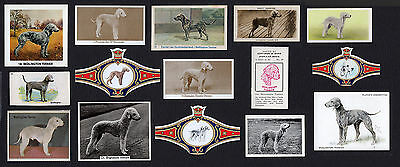 15 Bedlington Terrier Collectable Dog Cigarette Trade / Breed Cards And Bands