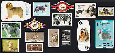 15 Bearded Collie Collectable Dog Breed / Trade Cards And Collectable Bands