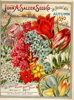 Mills Vintage Seed Cover Picture Art Print Poster A4 A3 A2 A1