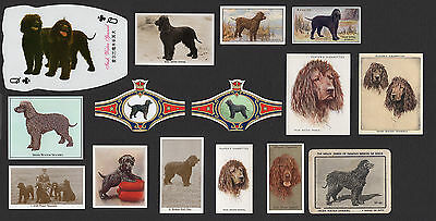 15 Irish Water Spaniel Collectable Dog Cigarette Breed / Trade Cards Bands