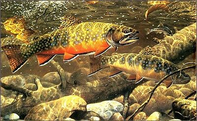 "3.25"" Native Brook Trout art Sticker / decal. Fly fishing river wildlife outdoor"