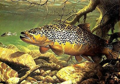 "3.25"" Lunker Brown Trout art Sticker / decal. Fly fishing river wildlife outdoor"