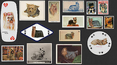15 Yorkshire Terrier Collectable Dog Cigarette Trade / Breed Cards And Stamps