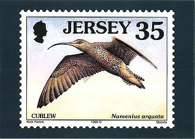 Jersey G Postcard Curlew 031