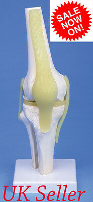 @Professional New Functional Knee Joint Flexible Anatomical Model@UK Seller@