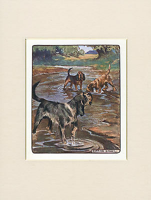 OTTERHOUND LOVELY 1905 ANTIQUE DOG PRINT by VERNON STOKES READY MOUNTED