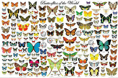 The Butterflies of the World Laminated Educational Science Chart Poster 24x36