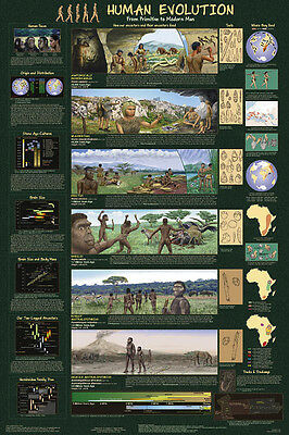 Human Evolution Laminated Educational Science Teachers Class Chart Poster 24x36