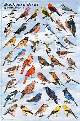 Backyard Birds Educational Science Reference Chart Print Poster 24x36