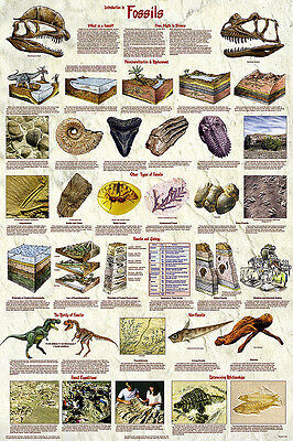 Introduction to Minerals Geology Laminated Education Science Chart Poster 24x36