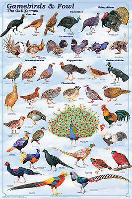 Gamebirds & Fowl Educational Science Teacher Classroom Chart Print Poster 24x36