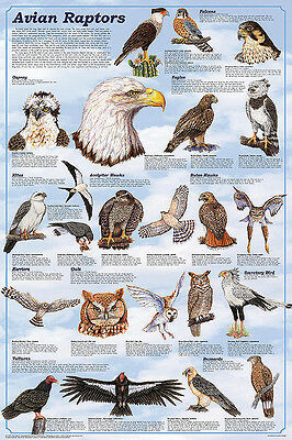 Avian Raptors Laminated Educational Science Classroom Chart Poster 24x36