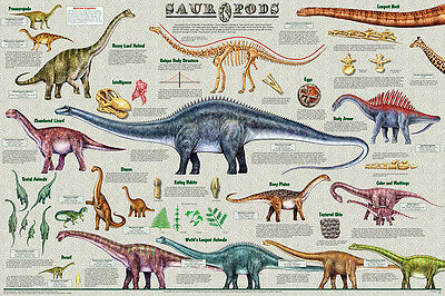 Sauropods Dinosauer Laminated Educational Science Classroom Chart Poster 24x36