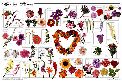 Garden Flowers Laminated Educational Science Reference Class Chart Poster 24x36