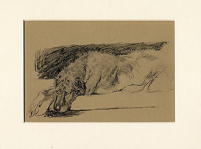 Irish Wolfhound At Rest Lovely 1934 Cecil Aldin Dog Art Print Ready Mounted