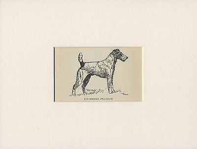 WIRE FOX TERRIER LOVELY ANTIQUE DOG PRINT FROM 1912 by WARDLE READY MOUNTED