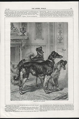 Borzoi Dogs Antique Woodcut Engraving Rspca Page Print 1890