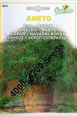 Dill Herb Seeds (4000 - 4200) seeds Superior Quality Very Fresh seeds.