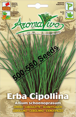 Chives Herb Seeds (500 - 550 ) seeds Superior Quality Very Fresh seeds.