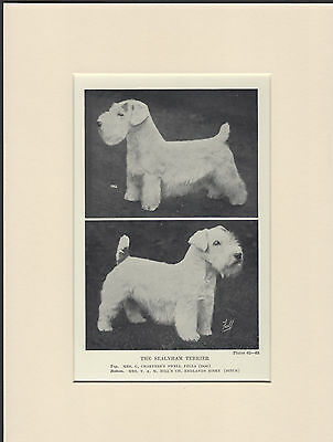 Sealyham Terrier Named Dogs Old 1930's Bookplate Dog Print Ready Mounted