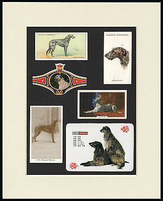 Scottish Deerhound Mounted Set Of Dog Collectable Breed Cards And Bands