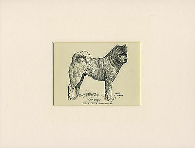 CHOW CHOW SMOOTH COATED LITTLE ANTIQUE 1912 DOG PRINT by WARDLE READY MOUNTED